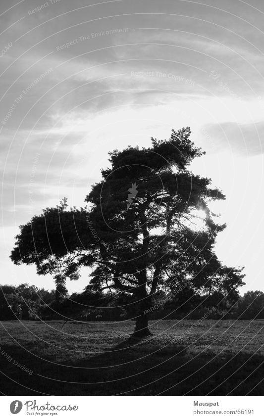 Außenseiter Himmel Baum Sonne Wolken Einsamkeit Heide