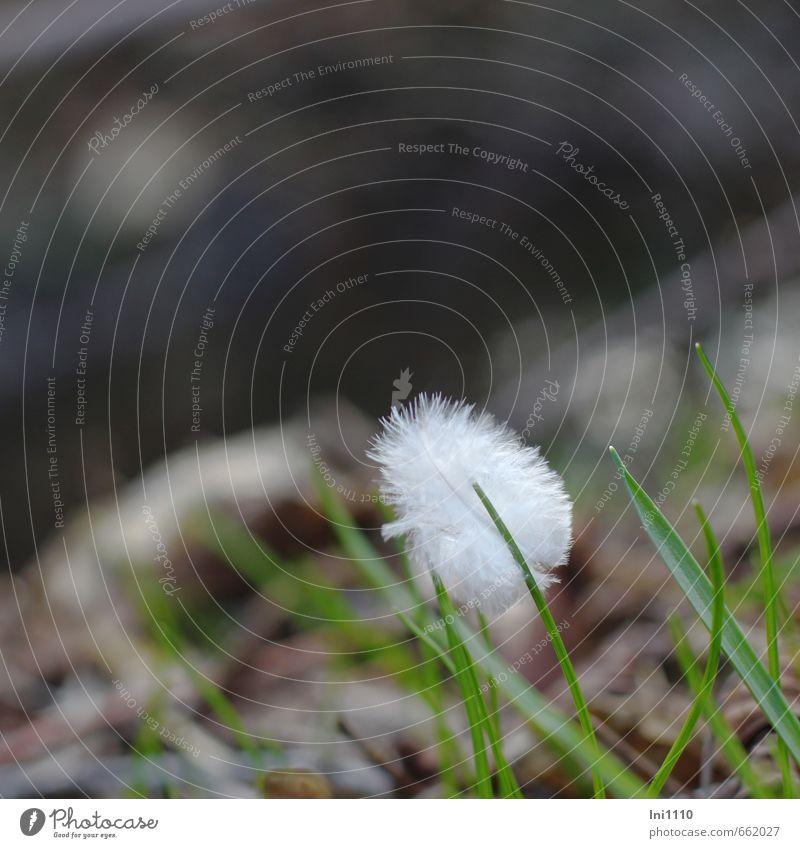 Feder Natur Pflanze Tier Erde Frühling Schönes Wetter Gras Bach grau grün schwarz weiß Fröhlichkeit Lebensfreude Frühlingsgefühle schön ruhig Reinheit Armut