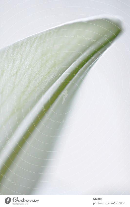 Frühlingsflügel Natur Pflanze Tulpe Blüte ästhetisch hell grün weiß Frühlingsgefühle Romantik Frühlingsblume Frühlingsfarbe Frühlingstag Vor hellem Hintergrund