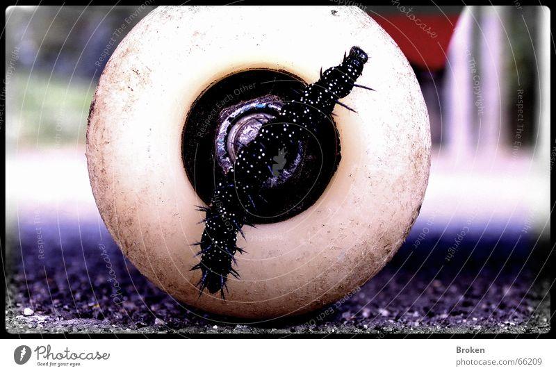 Go Skate Now! Insekt Rolle Asphalt weiß schwarz Raupe Makroaufnahme Bodenbelag Achse
