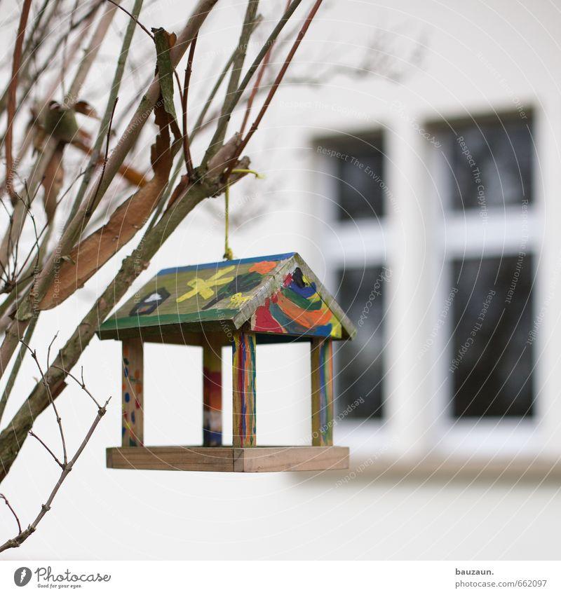 ich hab keinen vogel. Natur Pflanze Baum Freude Winter Fenster Herbst Spielen Holz Garten Vogel Park Fassade Häusliches Leben Sträucher Dekoration & Verzierung