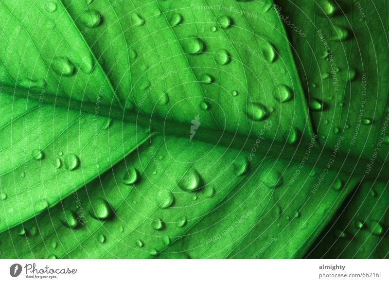 x-Ray grün Blatt Beleuchtung Wassertropfen schimmern Röntgenblick