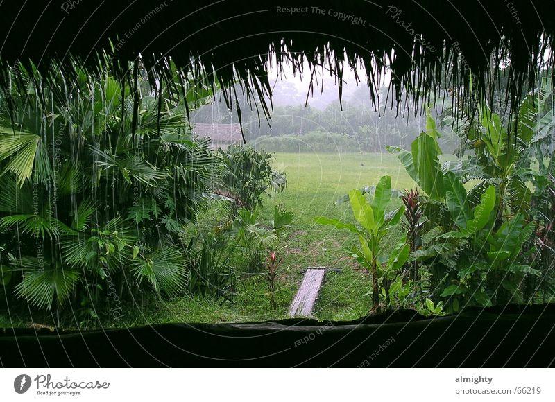 Regenwald grün Regen Urwald Hütte Bambusrohr Südamerika