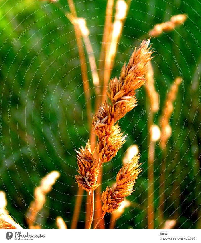 Hinterm Haus Natur Sonne grün Sommer Wiese Gras Garten Halm
