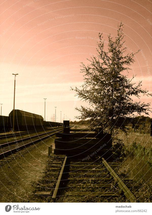 ENDSTATION IDYLLE | schienen natur romantik sonnenuntergang Natur Himmel Baum Einsamkeit Wiese Gras Eisenbahn Romantik Gleise Idylle Laterne