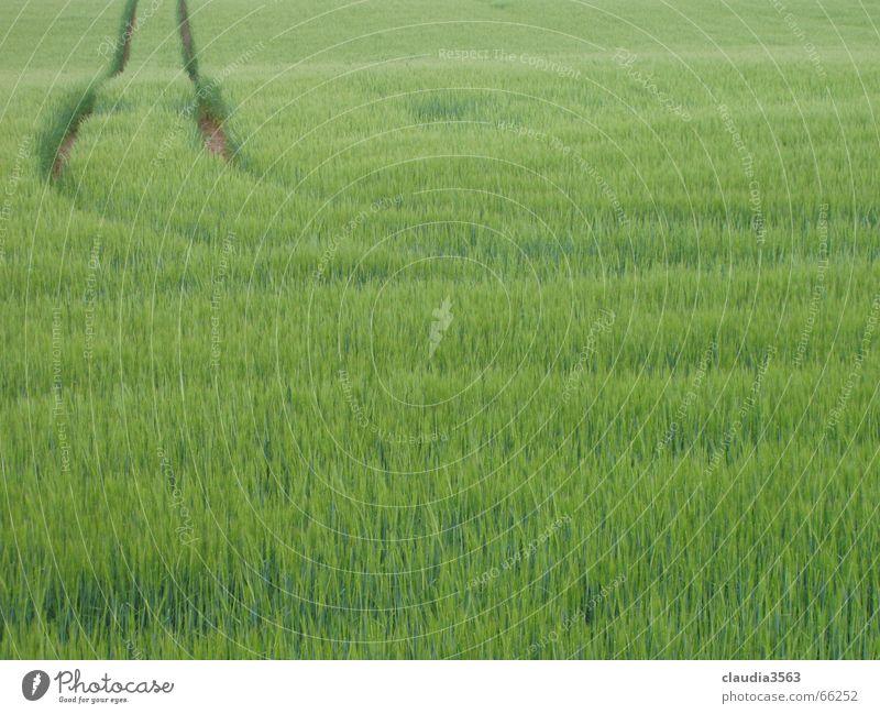 wohin gehts? Natur grün Ferne Wege & Pfade Feld Horizont Unendlichkeit Getreide Schmalspurbahn