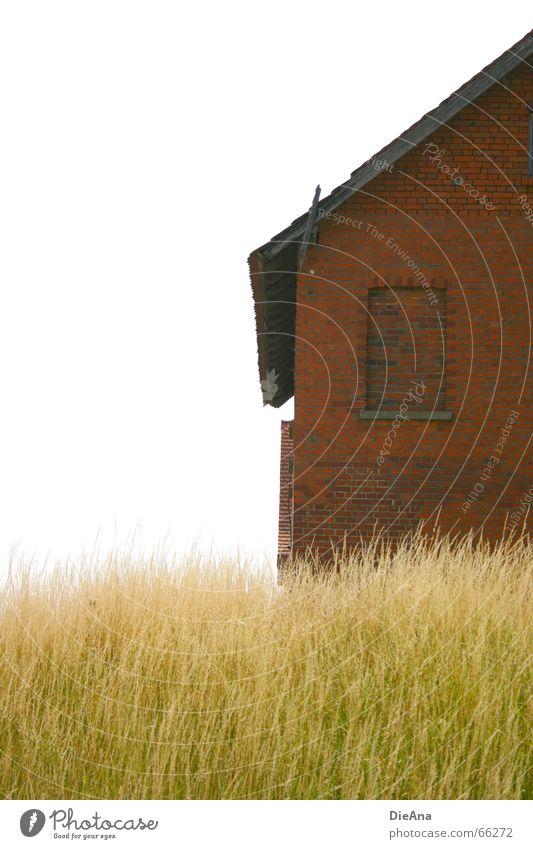 Backsteinhaus Natur grün weiß Sommer rot Haus Fenster Gras Idylle Halm Anschnitt