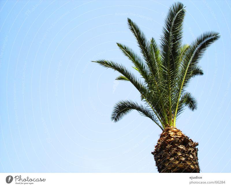 la.palma Natur Himmel Baum grün Ferien & Urlaub & Reisen Italien Palme Baumkrone Pompei