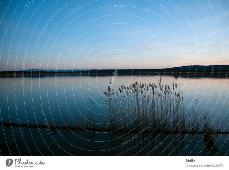 Still Umwelt Natur Landschaft Urelemente Wasser Himmel Sonnenaufgang Sonnenuntergang Gras Schilfrohr Seeufer dunkel natürlich blau Einsamkeit Erholung Idylle