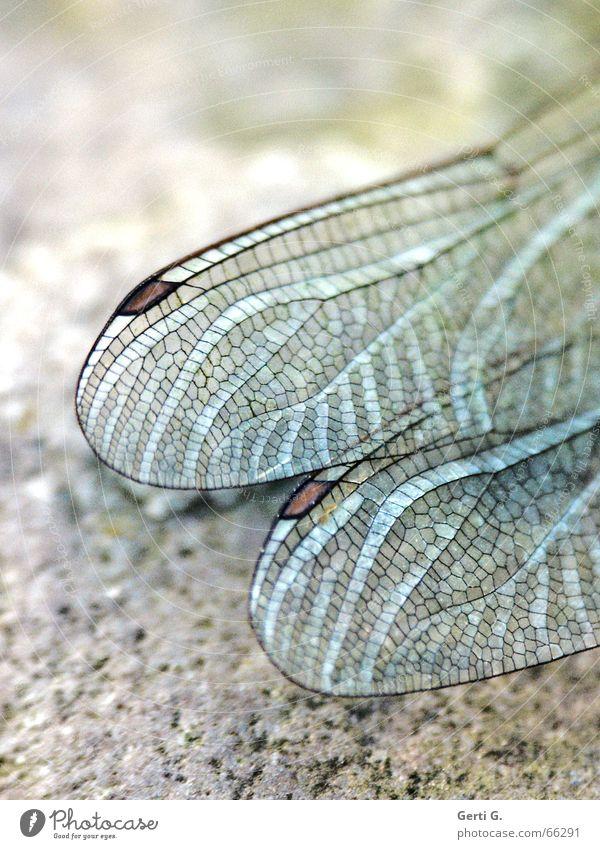 natural †ouchdown Libelle zart zerbrechlich stark Kraft Muster sensibel kariert Insekt Tier Gefäße Libellenflügel Flügel durchsichtig Strukturen & Formen Stein