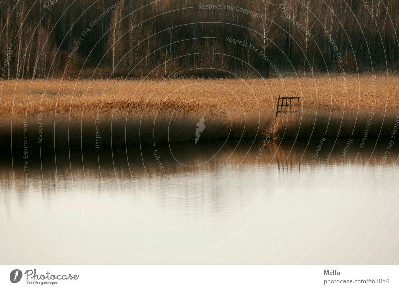 See Umwelt Natur Landschaft Urelemente Wasser Gras Seeufer Teich natürlich Einsamkeit Idylle ruhig Jägersitz Aussicht Farbfoto Außenaufnahme Menschenleer