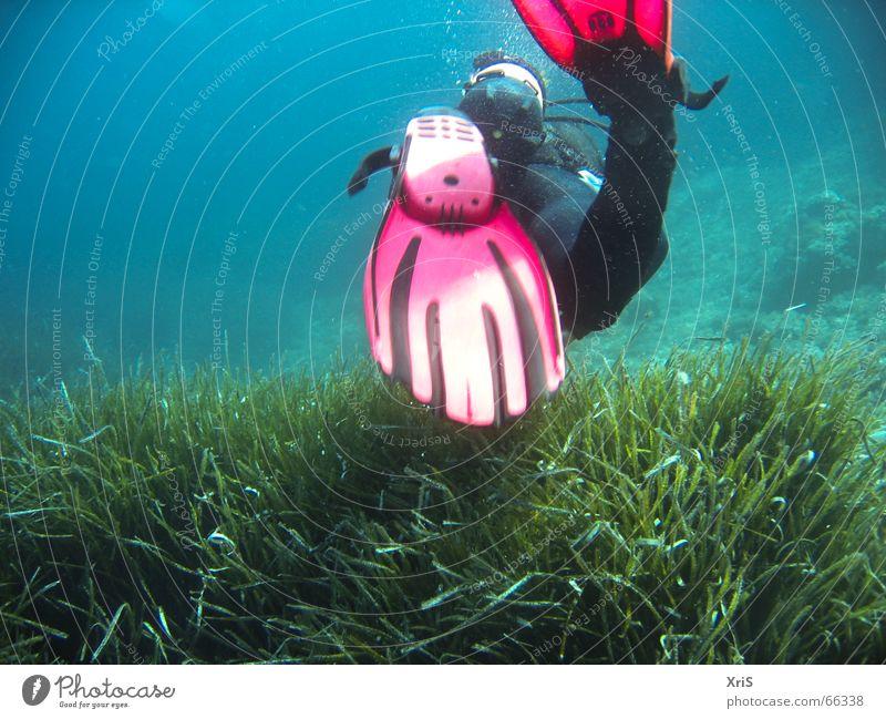 Mallorca - Party Unterwasser 4 grün blau rot Unterwasseraufnahme tauchen Luftblase Schwimmhilfe Taucher Algen Tauchgerät