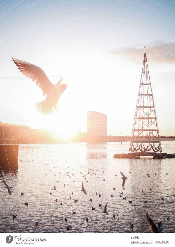 Natur Ferien & Urlaub & Reisen Stadt Sommer Wasser Tier Gebäude Zeit Freiheit fliegen Vogel Tourismus Zufriedenheit Ausflug Schönes Wetter Abenteuer