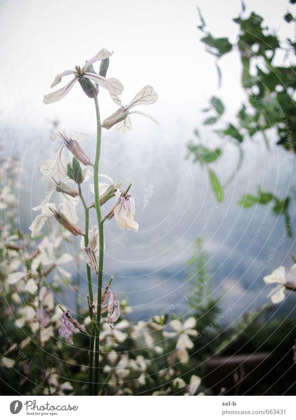 Natur Pflanze kalt Traurigkeit Gesunde Ernährung Blüte Gesundheit natürlich Garten Lebensmittel Erde Wachstum Gemüse Bioprodukte Gartenarbeit