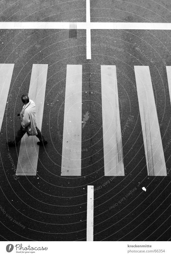Todesfälle im Strassenverkehr Zebrastreifen Mann Überqueren Verkehr Fußgänger gefährlich Autounfall Asphalt Rücken Schilder & Markierungen Straße