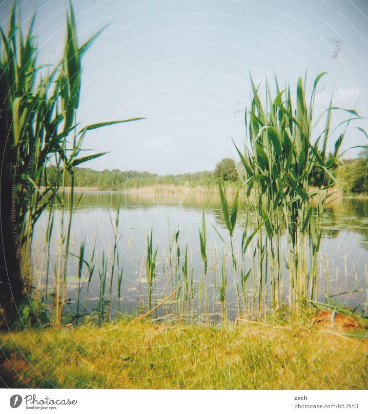 Brandenburg, geholgert Ausflug Sommer Sommerurlaub Schwimmen & Baden Umwelt Natur Pflanze Wasser Himmel Wolkenloser Himmel Frühling Gras Grünpflanze Schilfrohr