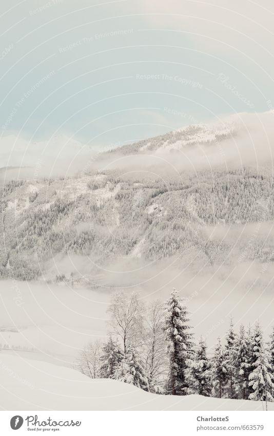 Nebelschwaden I Natur Landschaft Wassertropfen Wolken Winter Schönes Wetter Wind Schnee Wiese Wald Hügel Alpen Gipfel Schneebedeckte Gipfel Holz Wachstum