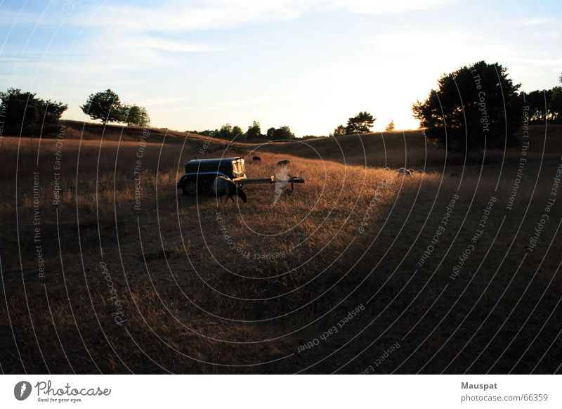 Sonnenuntergang auf der Westruper Heide Natur ruhig Erholung Landschaft Schaf Heide Heidschnucke