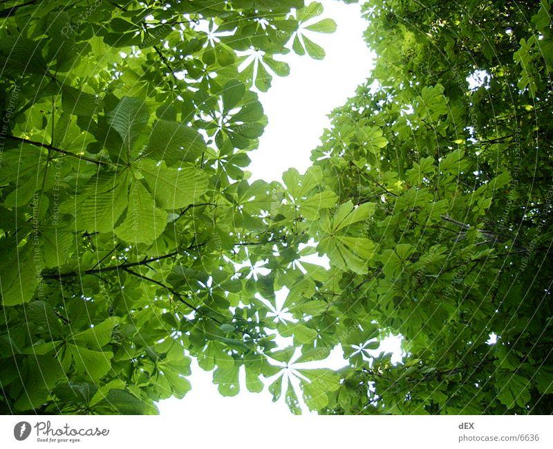 durchdieblätter Himmel Baum grün Blatt