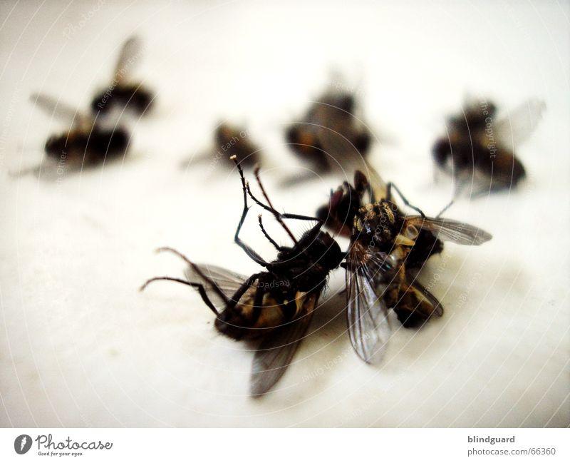 Friedhof der Nervensägen Tod Beine fliegen liegen Flügel Insekt böse rechnen schlagen Brummen Totensonntag Krematorium