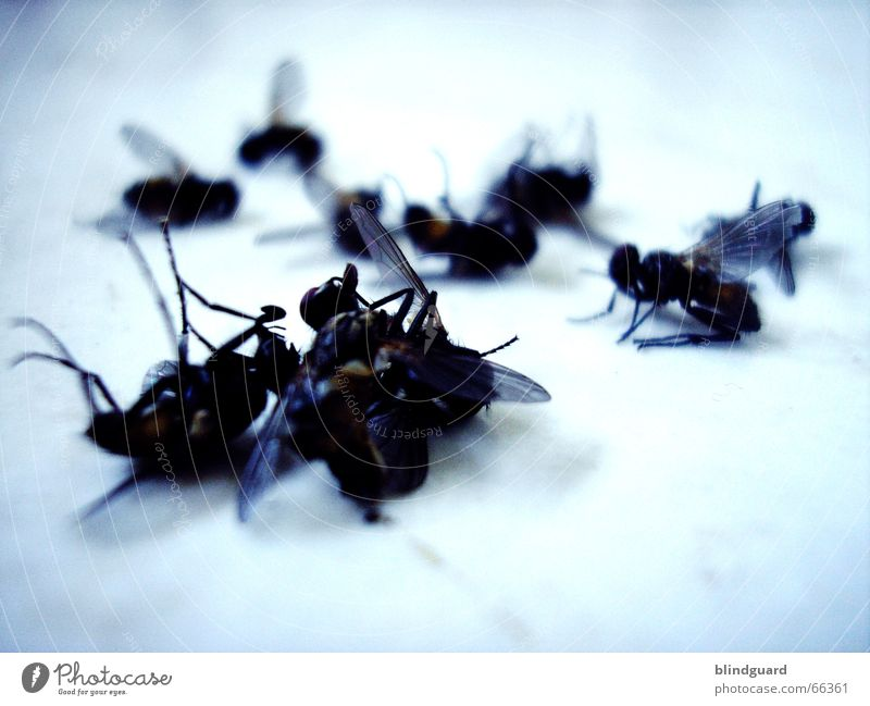 10 auf einen Streich Insekt schlagen Krematorium stabile seitenlage fliegen flogen Tod ein an der klatsche fliegenklatsche massensterben nervensägen böse