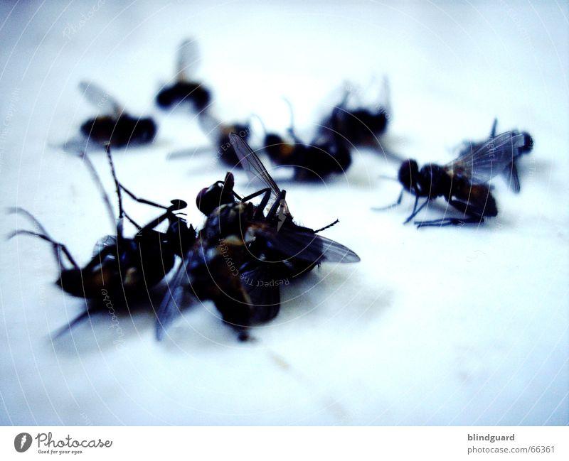 10 auf einen Streich Tod Beine fliegen Flügel Insekt böse rechnen schlagen Mathematik Brummen Totensonntag Krematorium
