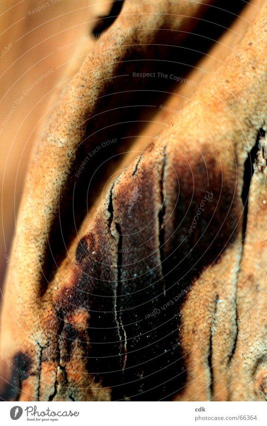 Faltenwurf ll Natur schön Farbe dunkel Wärme hell braun Haut tief Leder Riss Oberfläche beige Baumrinde Hülle