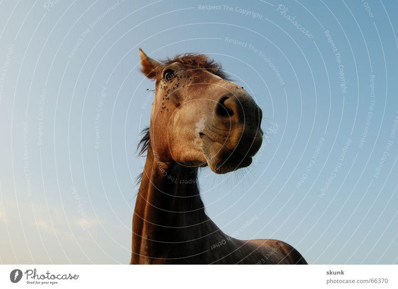 Pfeäd :D Himmel Auge Nase fliegen Pferd Ohr Neugier Hals friedlich Mähne Nasenloch Tier Nüstern