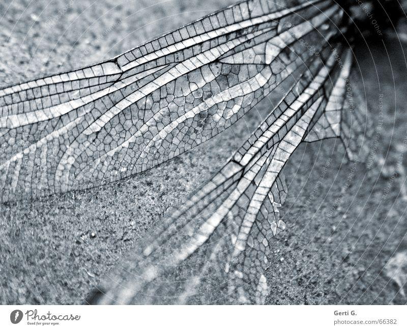 broken wings are 4 .... Tier Tod Luftverkehr kaputt Flügel zart Insekt Verfall gebrochen durchsichtig leicht Zerstörung sanft fein filigran sensibel