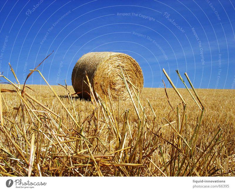Rundballen Himmel blau Feld gold Halm Stroh Strohballen Strohrolle
