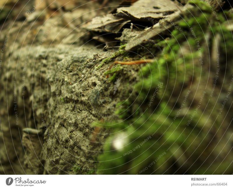 eins Blatt Wiese Stein Bodenbelag Waldboden Steinwand