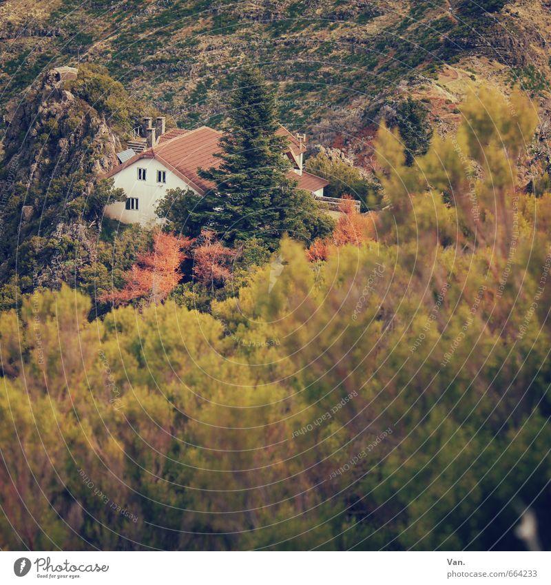 Da ist doch was im Busch Natur grün Pflanze Baum Haus gelb Berge u. Gebirge Herbst Felsen Sträucher Hütte Berghütte