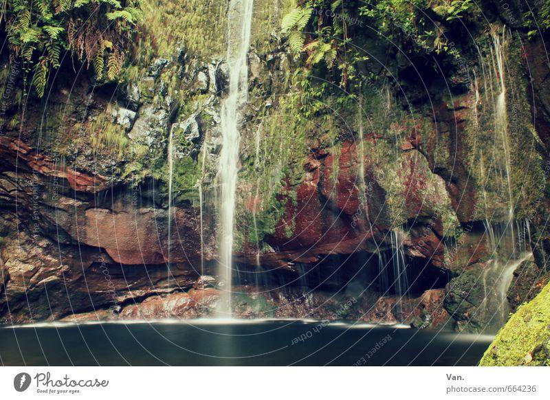 feuchter Keller Natur Pflanze Wasser Herbst Moos Farn Felsen Teich Wasserfall frisch nass grün Farbfoto mehrfarbig Außenaufnahme Menschenleer Tag Kontrast