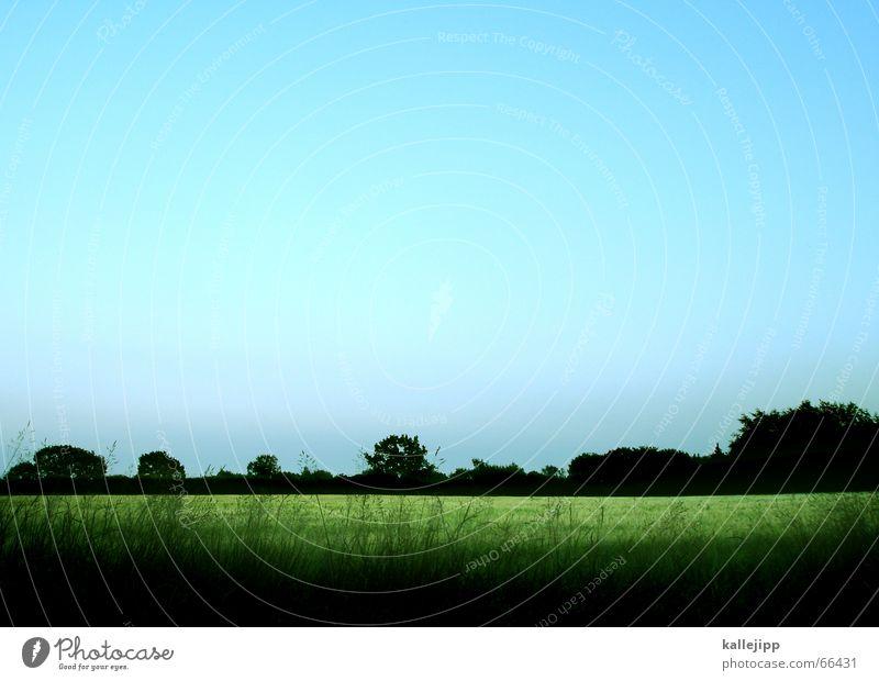 neuland Natur Himmel grün blau Landschaft Feld Weizen