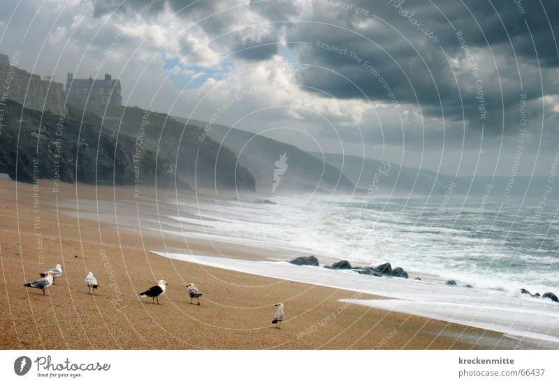 Ode To The Sea Wasser Meer Strand Haus Wolken dunkel Berge u. Gebirge Vogel Regen Wellen Küste Wetter Sturm Leidenschaft Möwe England