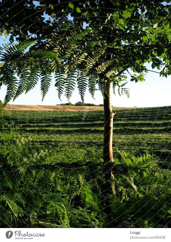 Durch den Baum Natur Baum grün blau gelb Wiese Amerika Weide