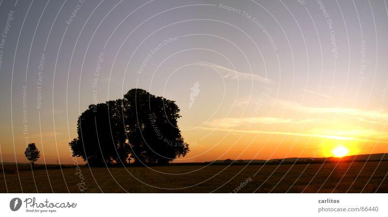 senile Schlafstörungen orange-rot Sommer Sonnenaufgang Morgen Wäldchen Panorama (Aussicht) Horizont Kondensstreifen Trauer Beerdigung Trauerfeier Tragödie Sorge