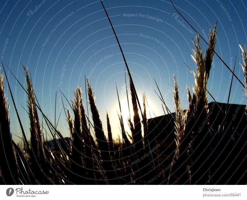Titellos Zufriedenheit Erholung ruhig Sonne Strand Insel Gras Wiese blau Einsamkeit Borkum Halm Zelt Sonnenuntergang Strandzelt down ausgelichenheit Abend