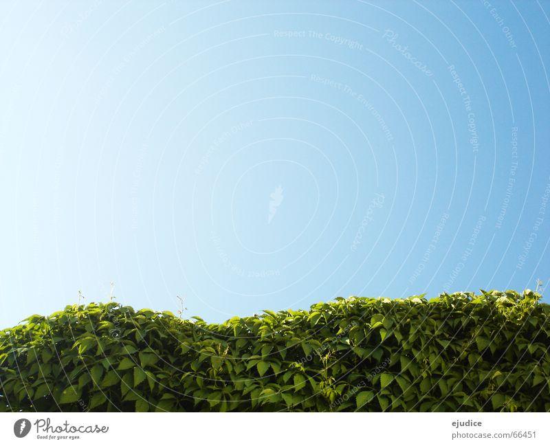 im.busch Natur Himmel grün blau Blatt Sträucher Hecke