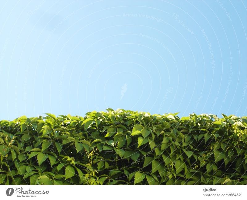 im.busch.II Natur Himmel grün blau Blatt Sträucher Hecke