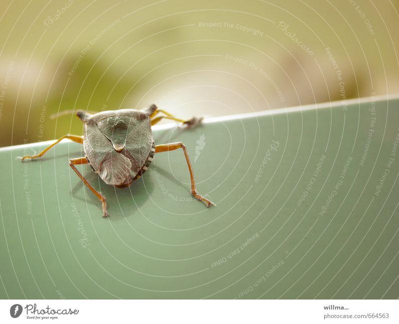 wanze beim hürdenlauf Wanze Insekt 1 Tier krabbeln Ekel Pflanzenschädlinge Barriere Schädlinge Farbfoto Außenaufnahme Textfreiraum unten