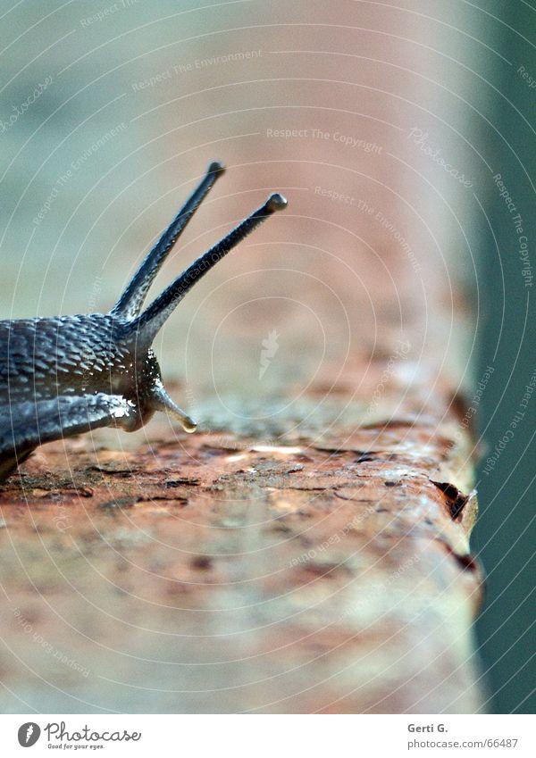 Speedy - die Serie Tier Bewegung Geschwindigkeit verfallen Rost Rausch Am Rand Schnecke Fühler Absturz Brückengeländer Schneckenhaus Tentakel Absturzgefahr
