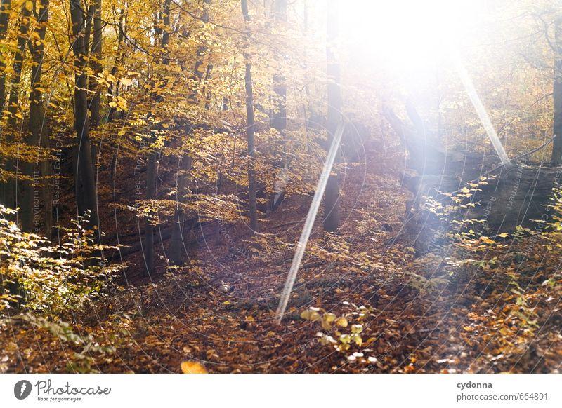 Sonniger Herbst Leben harmonisch Wohlgefühl Erholung ruhig Ausflug Freiheit Umwelt Natur Landschaft Sonnenlicht Schönes Wetter Baum Wald einzigartig erleben