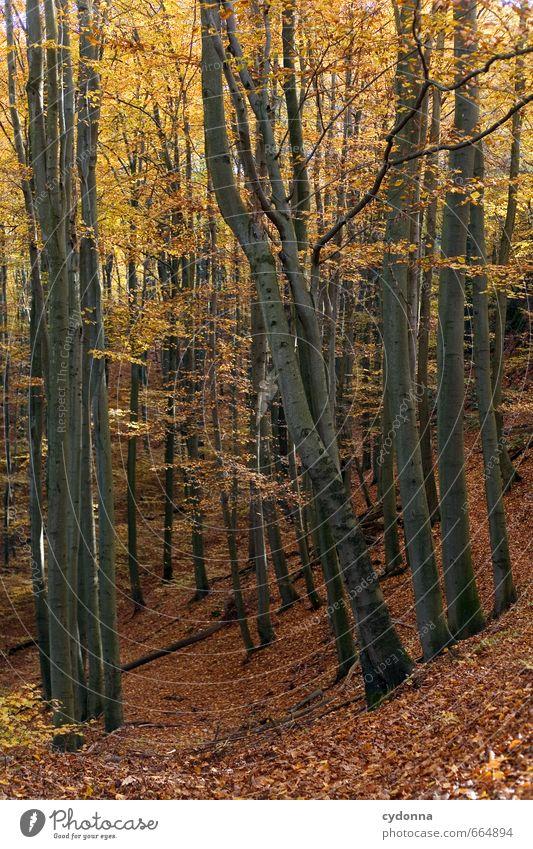 Goldener Herbst Natur Ferien & Urlaub & Reisen Farbe Baum Erholung Landschaft ruhig Wald Umwelt Leben Wege & Pfade Freiheit Idylle wandern Ausflug