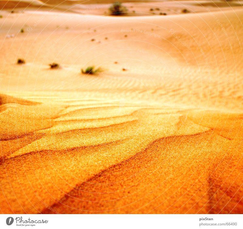 Wüstengold Ferne Sand gold Sträucher Wüste Stranddüne Dubai Naher und Mittlerer Osten