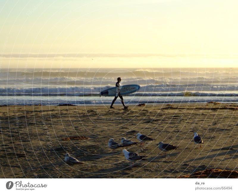Surfer mit Abendstimmung Mann Meer Strand Sport Vogel Möwe Abenddämmerung Surfer Wassersport Kalifornien Surfbrett