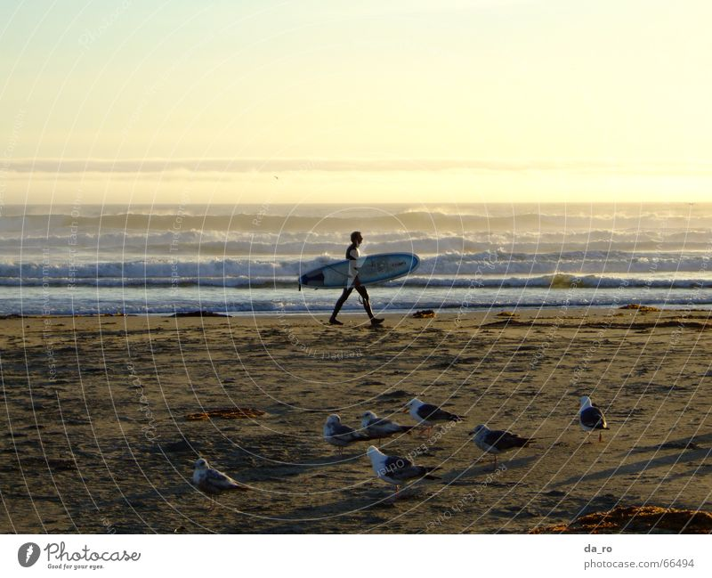 Surfer mit Abendstimmung Meer Strand Möwe Wassersport Abenddämmerung Sonnenuntergang Vogel Kalifornien Mann Surfbrett Sport
