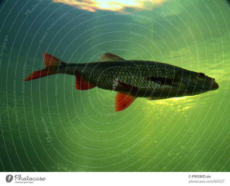 Wenn Angler träumen... III Mensch blau Wasser grün Meer Tier See Fisch Idee Gebiss Lebewesen Luftblase Fischereiwirtschaft Schwimmhilfe Algen Lebensraum