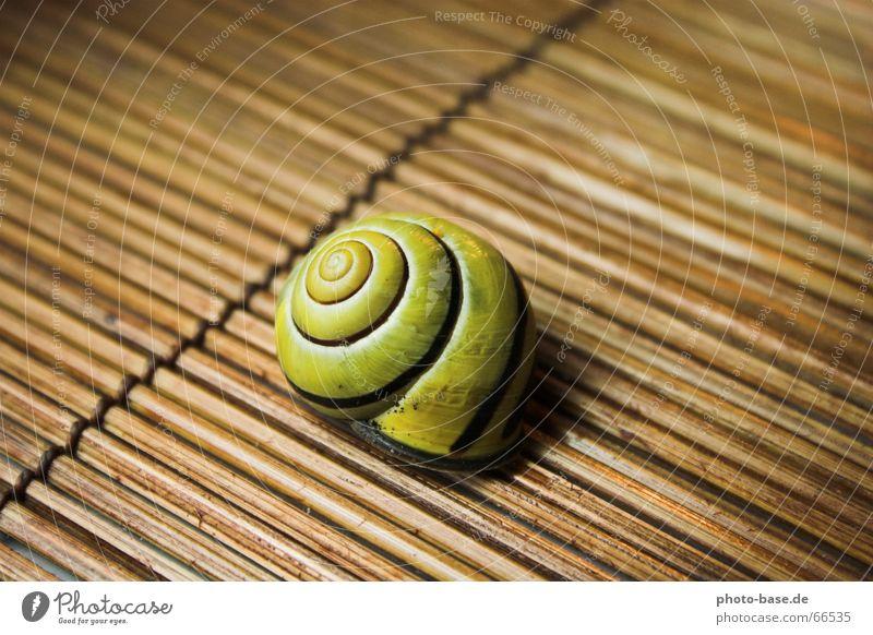 Hainschnirkelschnecke gelb Holz Schnecke Schalen & Schüsseln Spirale Schneckenhaus Unterlage Hainbänderschnecke