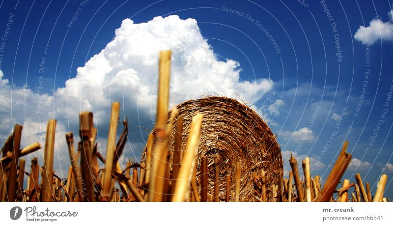 Himmel auf Erden Natur Himmel Wolken Herbst Feld Ball Gastronomie Landwirtschaft Amerika Ernte Weizen Stroh Gerste Strohballen